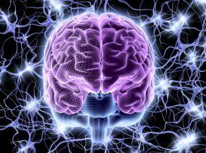 brain-975404